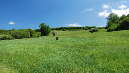 bile: meadows with trees in Bile Karpaty Mountains