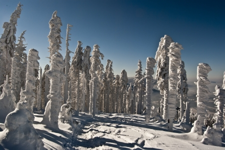 frozen forest and blue sky