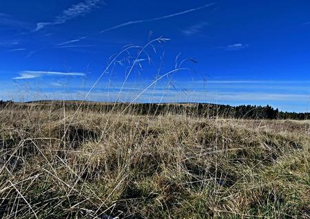 krkonose: autumn meadow in Krkonose mountains near Obri sedlo