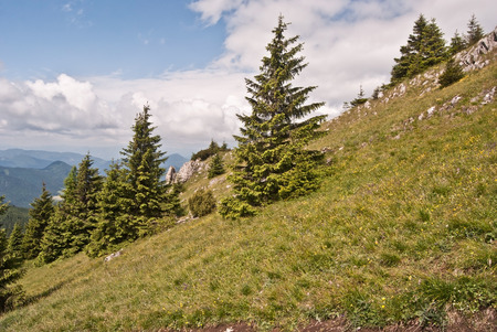 choc: meadow isolated tree and limestone rocks near Velky Choc hill in Chocske vrchy mountains Stock Photo