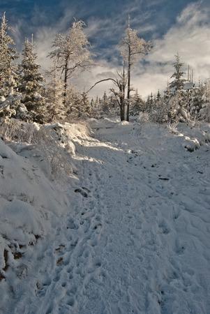 skala: hiking trail with frozen trees around, snow and nice sky near Malinowska Skala hill in Beskid Slaski mountains