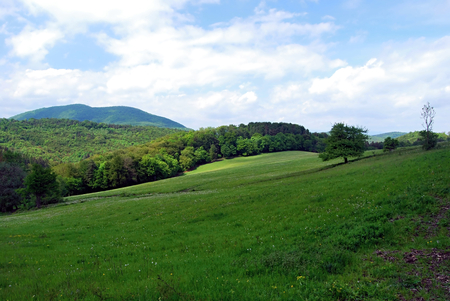skala: fresh spring meadow with isolated tree and Rohata skala mountain range in Strazovske vrchy mountains