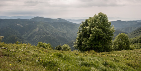 hill range: Starohorske vrchy mountain range from Predny Japen hill in Velka Fatra mountaine with mountain meadow and isolated tree Stock Photo