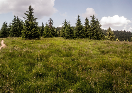 mala fatra: mountain meadow with trees and blue sky with clouds on Medzirozsutce mountain pass in Mala Fatra mountains
