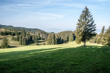 mountain meadow: mountain meadow with isolated tree and blue sky on Medzijarky above Jasenska dolina valley in Velka Fatra mountains in Slovakia