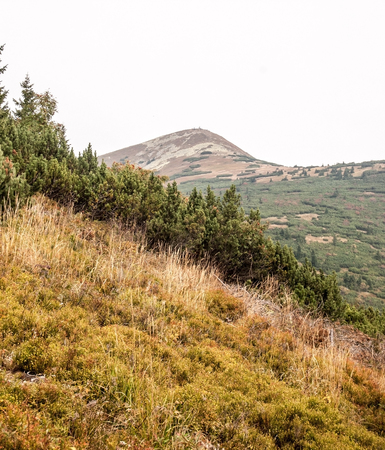 mala fatra: autumn mountain meadow with Maly Krivan hill on the background with blockfields in Mala Fatra mountains in Slovakia Stock Photo