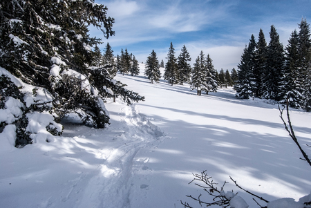 snowshoes: winter mountain meadow with trees, snowshoes steps and blue sky with clouds bellow Roseggerhaus chalet in Stuhleck mountain ridge in Fischbacher Alpen mountains in Styria