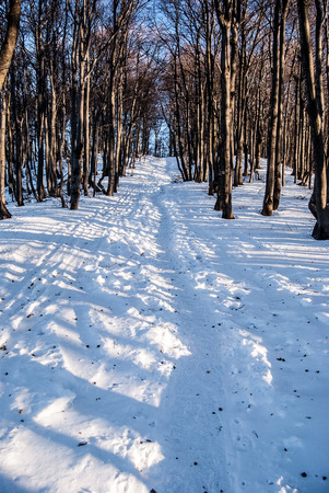 mala fatra: winter deciduous forest with snow, hiking trail and clear sky bellow Klak hill in Mala Fatra mountains in Slovakia Stock Photo