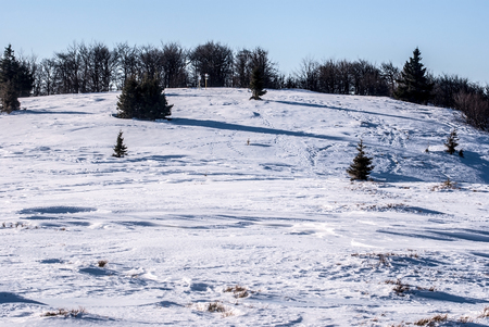 mala fatra: Horna luka hill with snow, trees and clear sky in winter Mala Fatra mountains in Slovakia