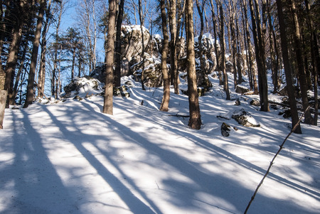 mala fatra: winter mountain deciduous forest with snow, rock formation and clear sky bellow Kosiariska hill in Mala Fatra mountains in Slovakia Stock Photo
