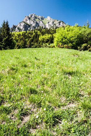 mountain meadow with trees on Medziholie with rocky dolomitian Velky Rozsutec hill in spring Krivanska Mala Fatra mountains in Slovakia