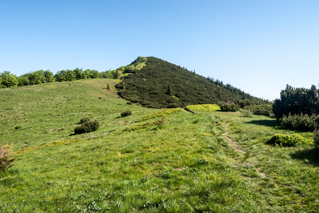 mugo: mountain meadow on Za Kraviarskym pass with Kraviarske hill covered by pinus mugo in spring Mala Fatra mountains in Slovakia with clear sky Stock Photo