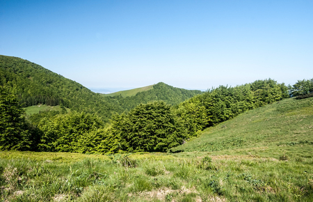 mountain meadow with trees, hills on the background and clear sky near Sedlo za Kraviarskym pass in Mala Fatra mountains in Slovakia Stock Photo