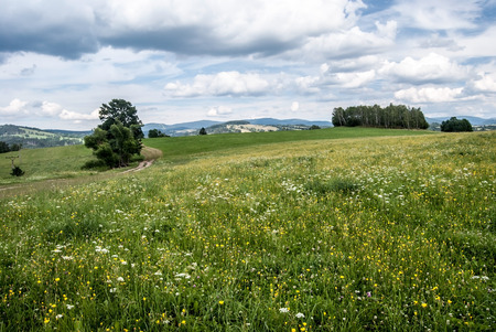 flowering summer meadow with isolated trees, trail, and Jeseniky mountain range on the background and blue sky with clouds near Stare Mesto pod Sneznikem in Czech republic