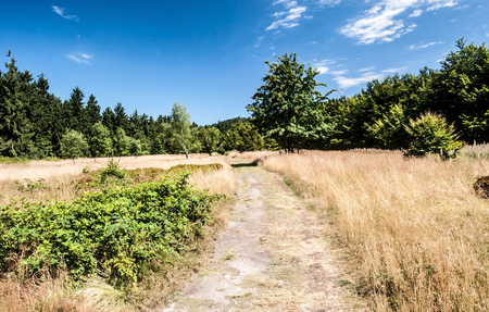 mountain meadow with hiking trail, trees and blue sky with few clouds bellow Radhost hill in Moravskoslezske Beskydy mountains in Czech republic during nice summer day 스톡 콘텐츠
