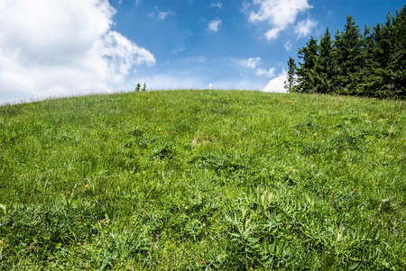 hill covered by mountain meadow with trees and blue sky with cloud - Hnilicka Kycera in Mala Fatra mountains in Slovakia Stock Photo