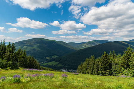 Jeseniky mountains with Kouty nad Desnou village bellow, meadow with flowers, hills and blue sky with clouds from hiking trail bellow Dlouhe strane hill in Czech republic