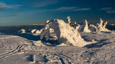 Winter on Martinske hole above Martin city in Mala Fatra mountains in Slovakia with snow covered shrubs and hills on the background