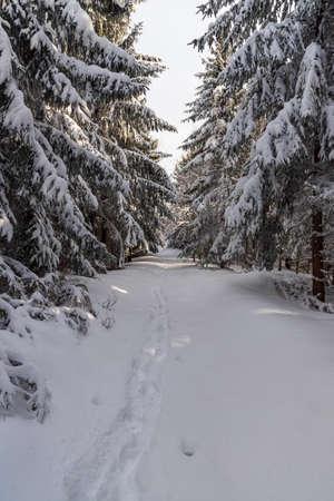 Snowcapped hiking trail in winter forest near Bily kriz in Moravskoslezske Beskydy mountains on czech - slovakian borders