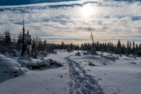 Winter scenery with snow cocvered forest glade, hiking trail, tree stump, forest and blue sky with clouds near Okrouhlice hill in Moravskoslezske Beskydy mountains in Czech republic Reklamní fotografie