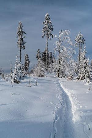 Winter mountain scenery with few trees, snow, hiking trail and blue sky near Nad Krsli hill summit above Moravka village in Moravskoslezske Beskydy mountains in Czech republic Reklamní fotografie