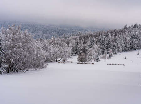 Freezing winter scenery with snow covered meadow, hills covered by deep forest and overcast sky bellow Boruvkova hora hill in Rychlebske hory mountains on czech - polish borders Reklamní fotografie