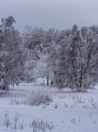 Winter scenery with frozen trees and overcast sky - Rychlebske hory mountains above Travna village on czech - polish borderlands