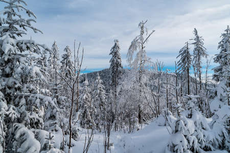 Winter mountain scenery with trees, snow, hill on the background and mostly cloudy sky - nad Krsli hill and Maly Polom hill on the background in Moravskoslezske Beskydy mountains in Czech republic Reklamní fotografie