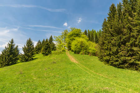 Fresh green springtime mountain meadow with trees and blue sky above sedlo Prislop saddle in Velka Fatra mountains in Slovakia