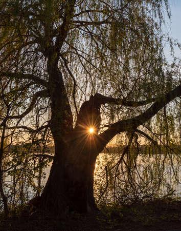 willow with sun with sunlights and Bzeruc pond on the background in springtime CHKO Poodri near Jistebnik village in Czech republic