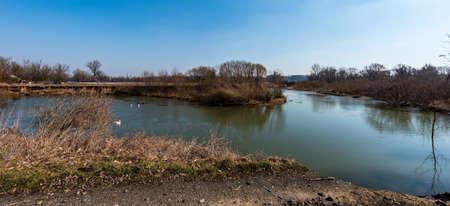 Odra river meander with swans near Polanka nad Odrou - part of Ostrava city -  in Czech republic during early springtime day Reklamní fotografie