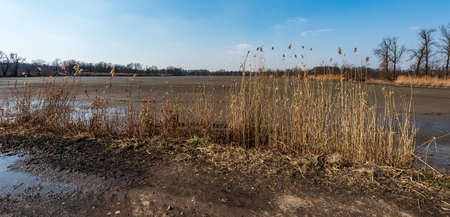 Released pond with reeeds, trees on the background and clear sky during early springtime day Reklamní fotografie