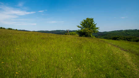 Meadow with deer stand, isolated tree and hills on the background above Nedasova Lhota village in Bile Karpaty mountains in Czech republic near borders with Slovakia