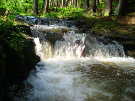 Forest river Stock fotó