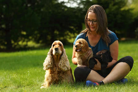 Amazing, newborn and cute red English Cocker Spaniel puppies with her mother. Red English Cocker Spaniel puppies in human hug. Green background. Morning sun. Imagens