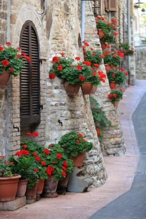 Geranium flowers in streets of Assisi, Umbria, Italy Stock Photo