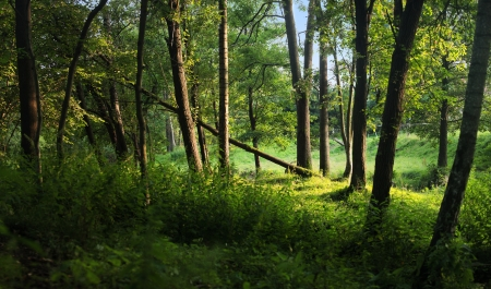 Groene bos