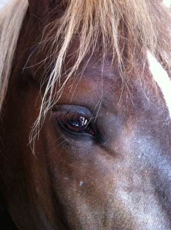 eye: Portrait of horse with detail on eye Stock Photo