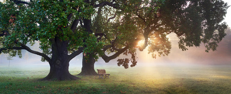 panorama of bench under old oak tree at misty autumn morning with sunbeams shining thru leaves