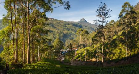 adams: Panorama of Dalhousie town with Adams peak and tea plantations at sunrise, Srilanka, Asia