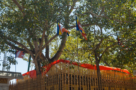 anuradhapura: The temple of Sri Maha Bodhi the oldest planted tree, Anuradhapura, Sri Lanka, Asia