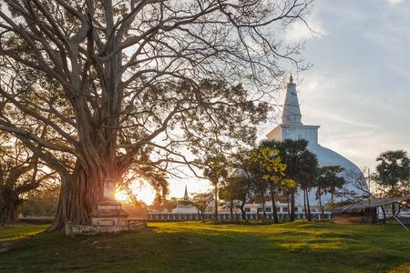 Mahatupa grote Dagoba in Anuradhapura en oude boom bij zonsondergang, Sri Lanka, Azië