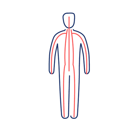 治癒: Meridians of the body red and blue linear icon on white background   flat design alternative healing illustration and infographic  イラスト・ベクター素材
