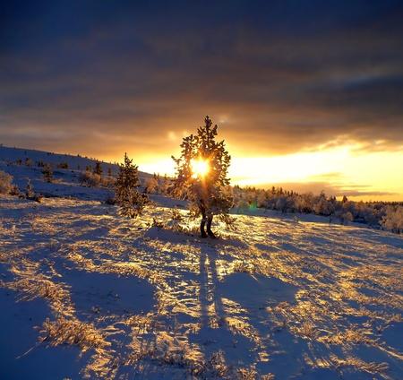 laponie: Magnifique coucher du soleil de la Laponie avec arbre dominant solitude