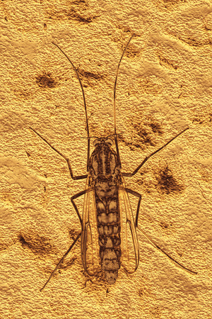 gnat: Background of mosquito fossil, 3D texture illustration.