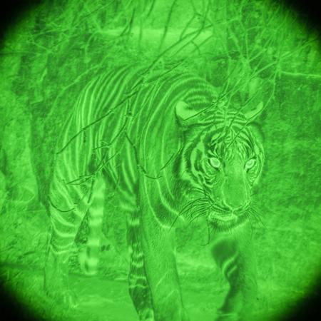 Wild tiger at hunt by night vision illustration. Zdjęcie Seryjne