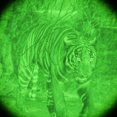 night vision: Wild tiger at hunt by night vision illustration. Stock Photo