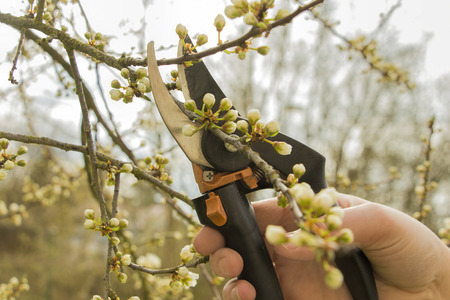 Spring gardening, work at the garden, pruning fruit trees.