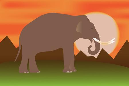 ceylon: Elephant at sunset