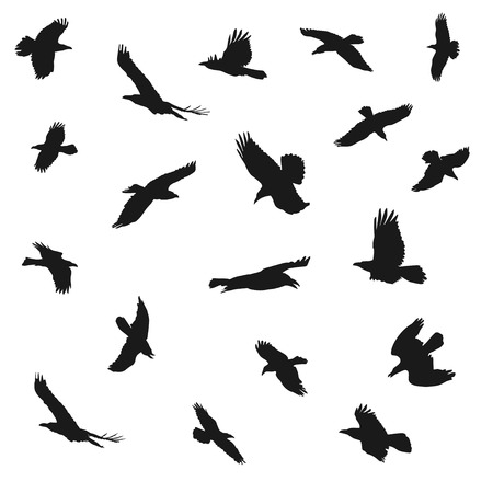 Vector illustration of eagles flying silhouettes. Concepts of elegance, strength and freedom.